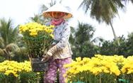 Hàng triệu giỏ hoa Mỹ Tho đang đổ về Sài Gòn, Bình Dương, Tây Ninh...