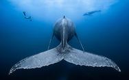 Nghẹt thở những bức ảnh ấn tượng chụp dưới nước