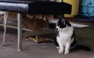 Người Nhật bỏ người, cầu nguyện cho mèo trong siêu bão Hagibis?