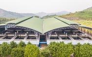 Công ty nước sạch Sông Đà xin lỗi người dân và miễn tiền nước 1 tháng