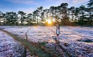 Cao nguyên Langbiang kỳ ảo mùa hội cỏ hồng
