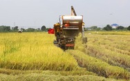 Sản lượng thóc của Thái Lan sẽ giảm trong niên vụ 2019-2020