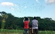 Để đồi cho chim về ở, hơn 30 năm coi đàn cò như con