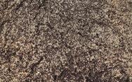 Phát hiện bí mật của 'binh đoàn' triệu con kiến trong hầm chứa hạt nhân
