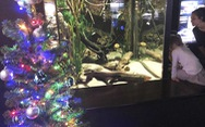 Du khách sốc khi thấy lươn phóng điện thắp sáng thông Giáng sinh