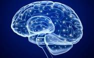 Phát hiện mối liên hệ giữa trí thông minh mềm và kích cỡ não