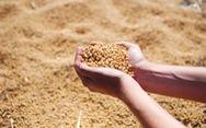 Sản xuất màng bọc thực phẩm từ đậu tương