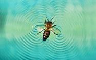 Giải mã khả năng 'lướt ván' siêu đẳng ở loài ong