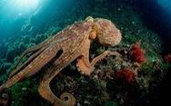Loài nào thông minh nhất đại dương?