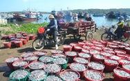 Đầu năm ngư dân miền Trung đón lộc biển