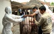 8 phòng xét nghiệm miễn phí virút gây dịch tả lợn Châu Phi