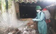 Thái Bình lập chốt tất cả cửa ngõ để ngăn dịch tả lợn châu Phi