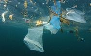 Cá voi chết thảm vì ăn 40kg rác nhựa