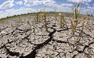 Biến đổi khí hậu khiến cây cối tiết ra chất độc chết người
