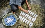 Đặc sản thịt chuột của Việt Nam lên tạp chí National Geographic