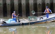 Bắt bớt cá vì kênh Nhiêu Lộc - Thị Nghè chứa không nổi