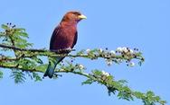 'Đốt tiền' thỏa mãn đam mê chụp ảnh chim hoang dã