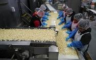 Dân trồng tỏi ở Mỹ thở phào mong thương chiến