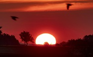 Một nửa lãnh thổ Pháp trong tình trạng báo động vì nắng nóng bất thường