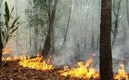 Rừng keo ở Quảng Nam bốc cháy dữ dội