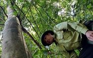 Bảo vệ rừng… bỏ rừng vì bị nợ lương