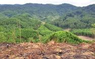 Ngăn cháy rừng từ chính sách lâm nghiệp