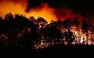 Rừng ở Hà Tĩnh lại cháy đỏ rực trong đêm