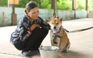 Cậu Vàng của Lão Hạc có nhất thiết phải là giống chó thuần Việt?