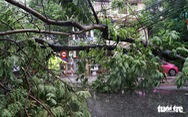 Bão số 3 qua Móng Cái, Hải Phòng, gió giật hàng loạt cây xanh ngã rạp