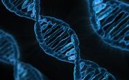 Nhóm nhà khoa học tình cờ tìm ra vũ khí bí mật tiêu diệt HIV
