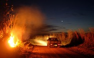 Thêm 2.000 đám cháy mới ở Amazon chỉ sau 2 ngày Brazil cấm đốt rừng
