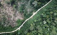 Rừng Amazon góp 20% khí oxy cho Trái đất, có đúng không?