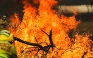 Australia chi tiền điều trị chấn thương tinh thần do cháy rừng gây ra