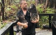 Hết chạy cháy rừng, koala lại phải chạy lũ
