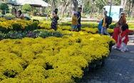 Sợ 'ngậm hàng', nhiều nhà vườn bắt đầu giảm giá hoa