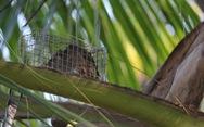 Đặt chuột dừa thu nhập tiền triệu mỗi ngày