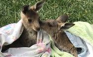 Những chiếc túi thấm đẫm tình yêu thương động vật gặp nạn