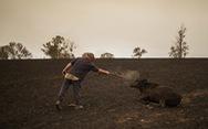 Từ cháy rừng ở Úc, hãy nghĩ đến rừng Việt Nam!