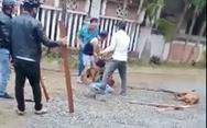 Kinh hoàng cảnh chó pitbull tấn công làm một bà cụ dập nát cánh tay