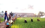 Đi tiệc thưởng thức cánh đồng