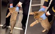 Con mèo gây sốt vì bị đuổi do đi tàu 'lậu'