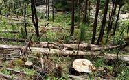 Phó thủ tướng yêu cầu xử lý nghiêm vụ phá rừng phòng hộ ở Lâm Đồng