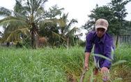 Báo Tuổi Trẻ cùng GREENFEED trao 460 triệu đồng vốn cho nông dân Bến Tre