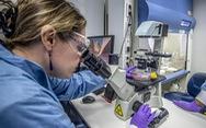 Nghiên cứu khoa học về COVID-19 'nhiều chưa từng có', nhưng có nên share?