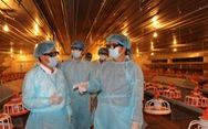 Đưa gà giống Việt nuôi theo công nghệ hiện đại xuất khẩu ra thế giới
