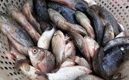 Cá diếc chiên giòn chấm mắm ớt, món bình dân biến thành 'hàng hiệu'