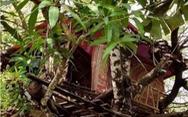 Cách ly 14 ngày trên… cây vì dân không cho vô làng