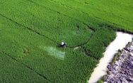 Đề xuất bỏ hạn ngạch trong xuất khẩu gạo