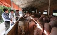 Bộ Nông nghiệp nói gì khi giá thịt heo vẫn tăng?