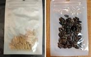 Có gì trong các gói hạt giống bí ẩn gửi từ Trung Quốc?